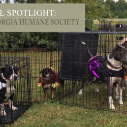 Heart of Georgia Humane Society