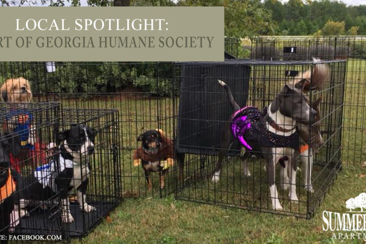 Local Spotlight: Heart of Georgia Humane Society