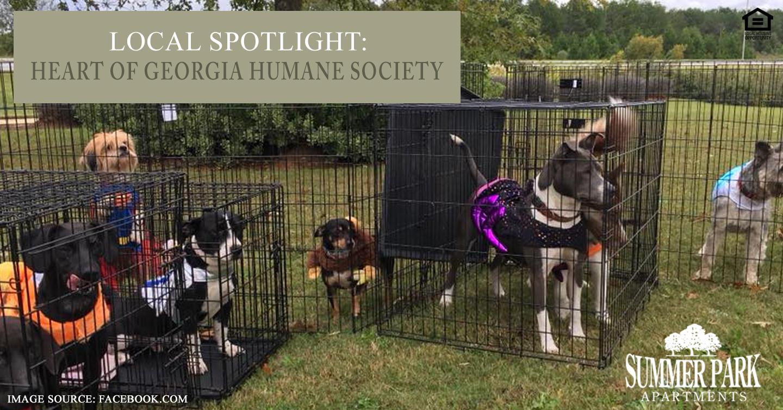 Heart of Georgia Humane Society