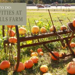 fall activities at Hamlin Hills Farm
